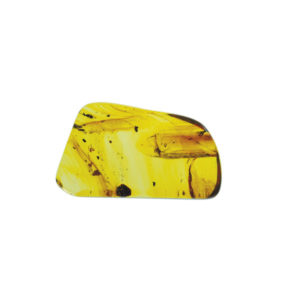 Amber, fossil, resin, baltic, polished