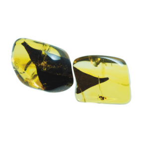 Amber, fossil, resin, baltic, polished, inserts, insects, fossilized, eocene
